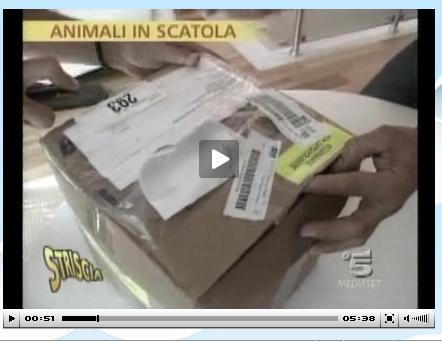 Animali in Scatola Striscia